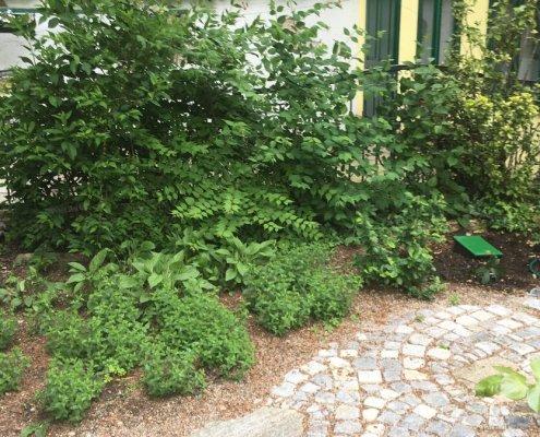 Gartenentwicklung